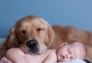 Il miglior amico di tuo figlio è un cane?