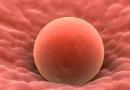 Rimane incinta grazie ad un autotrapianto di tessuto ovarico: la storia di Alessandra